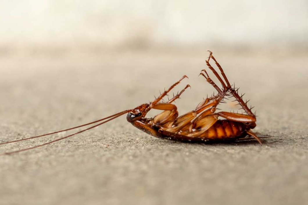 Evict Bugs From Your Apartment Complex
